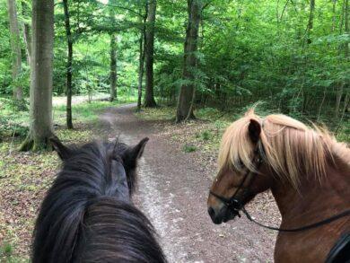 Op på hesten og bliv klogere på dig selv!